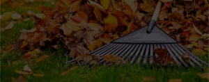 Leaf cleanup in Edmonton, Spruce Grove and Stony Plain